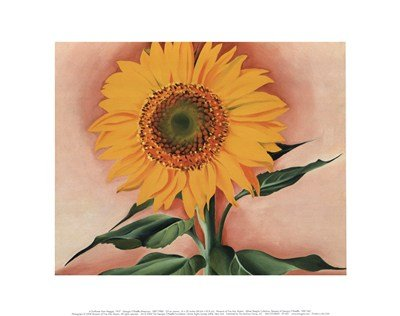 A Sunflower from Maggie, 1937 Art Print by Georgia O'Keeffe 14 x 11in (From The Lake By Georgia O Keeffe)