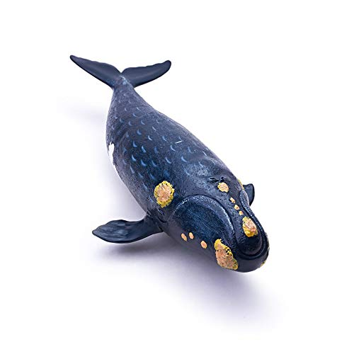 RECUR Right Whale - Realistic Hand Painted Northern Pacific Right Whale Toy Figurine Model, 12.2inch Ocean Life Black Whale Figure Toys 1:55 Replica, Collection Gift for Children Boys Girls Ages - Japonica Collection