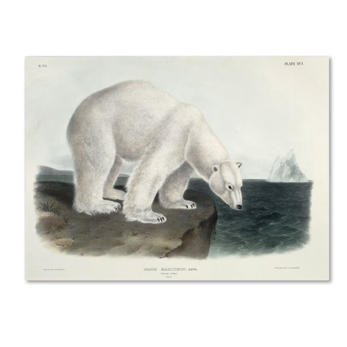 Ursus Maritimus Polar Bear Artwork by John James Audubon, 14 by 19-Inch Canvas Wall Art (Polar Bear Artwork)