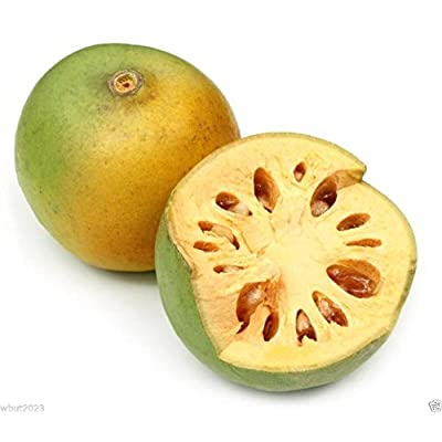 INDIAN BAEL Seeds a.K.a Bengal Quince, Golden Apple, Stone Apple, Aegle marmelos : Garden & Outdoor