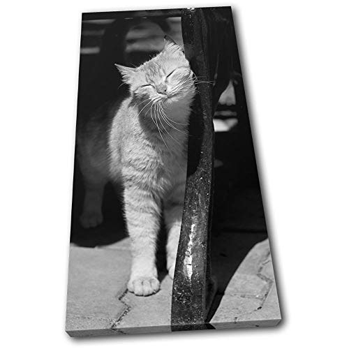 - Bold Bloc Design - Tabby cat Content Pets Black White Animals 180x90cm Single Canvas Art Print Box Framed Picture Wall Hanging - Hand Made in The UK - Framed and Ready to Hang RC-0516(00B)-SG21-PO-D
