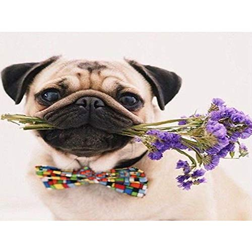 - 5D Diamond Painting by Number Kit, Full Drill Pug and Flowers Flowers Rhinestone Embroidery Cross Stitch Supply Arts Craft Canvas Wall Decor