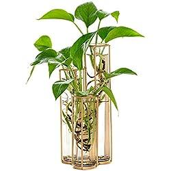 Vases - Modern Tube Shape Glass Vase Bottle Diy Home Decoration Terrarium Hydroponic Green Container - Transparent Humidifier Insulation Terrarium Maintenance Drainage Filter Under Unicorn Tan