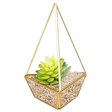 HOMEIDEAS Clear Glass Pyramid Tabletop Succulent Plant Terrarium Box / Air Plant & Cacti Holder Case 4.3 x 4.3 x 8.3 Inches(golden)