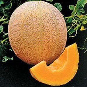100+ Hales Best Jumbo Cantaloupe Seeds Packed for 2015 (Hales Best Cantaloupe Seed)