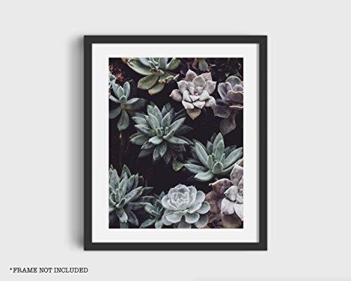 Succulent Plants Garden Botanical Poster Print 11x14 Inches Wall Art Home Decor (Unframed) from Ink Print Art