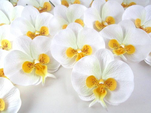 100-White-Yellow-Phalaenopsis-Orchid-Silk-Flower-Heads-375-Artificial-Flowers-Heads-Fabric-Floral-Supplies-Wholesale-Lot-for-Wedding-Flowers-Accessories-Make-Bridal-Hair-Clips-Headbands-Dress