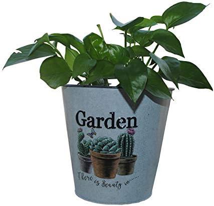Ashley ZC Cactus Metal Planters, Iron Flower Pot – Circle Garden Container Box Succulent Bucket Basket – Indoor or Outdoor Decor