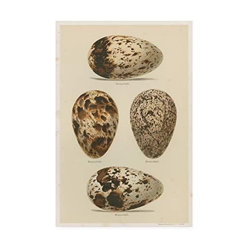 Trademark Fine Art Antique Bird Egg Study VI by Henry Seebohm, 16x24