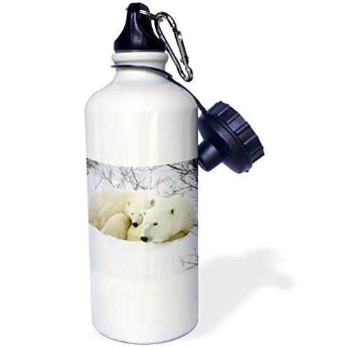 - 3dRose Polar Bear Female and cub, Churchill, Manitoba, Canada. -Sports Water Bottle, 21oz (wb_207222_1), Multicolored