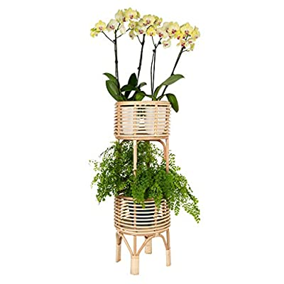 KOUBOO Rattan Indoor Two-Tier Plant Stand, Natural Planter, Large, Brown: Kitchen & Dining