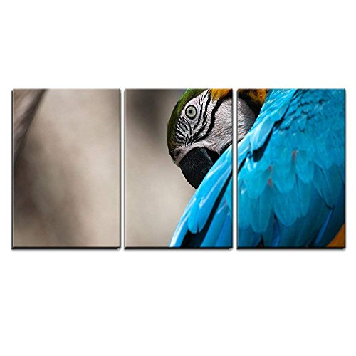 wall26 - 3 Piece Canvas Wall Art - Blue and Yellow Macaw Perched on a Tree Branch - Modern Home Decor Stretched and Framed Ready to Hang - 24