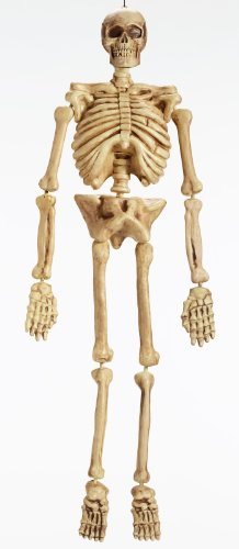 Skeleton 5ft (Skeletons Halloween)
