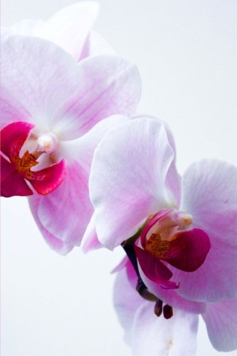 Pink Orchids Journal