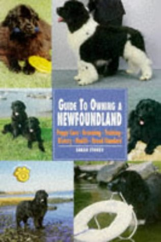 Guide To Owning A Newfoundland  Re Dog