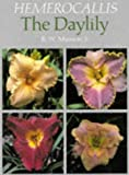 Amazon / Brand: Timber Press, Incorporated: Hemerocallis The Daylily (R. W. Munson Jr.)