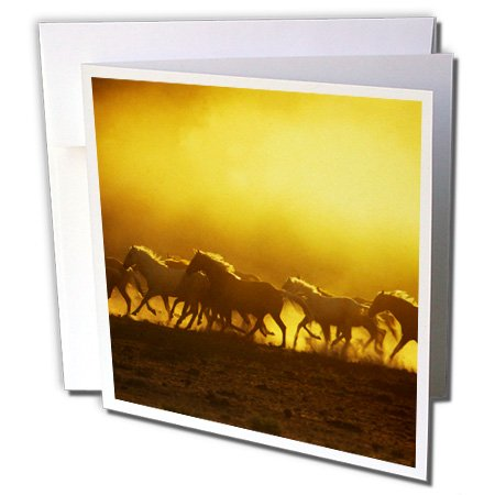 3dRose Oregon, Wild Kiger mustang horse kicking up dust - US38 BJA0029 - Jaynes Gallery - Greeting Cards, 6 x 6 inches, set of 6 (Kiger Mustang Horse)