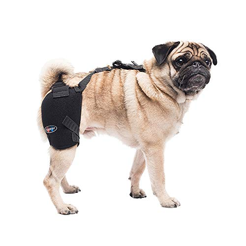 CALDERA Pet Therapy Wrap - Hip - Small