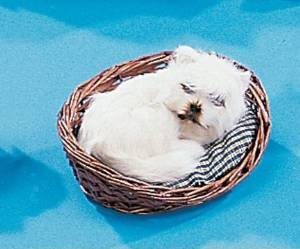 """Fits American Girl or Any Similiar 18"""" Dolls. Doll Clothing Darling Little Cream White Puppy Dog. Curled up in Basket Includes Dog Bed Pillow."""