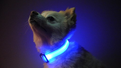 The Pet Hut USB Rechargeable LED Dog Safety Glow Collar - 4 Colors And 3 Sizes! (Blue Large) HOLIDAYS PROMO ON NOW 50% OFF FINAL SALE - 3 2 Hut 4