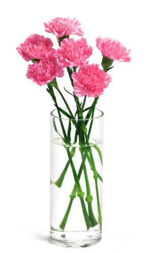 Amazon.com : Pink Carnation Bouquet (6 Stems) - With Vase : Grocery on flower bouquet, flower stand, flower pot, flower window, flower crystal, flower punch set, flower dinnerware set, flower coloring pages, flower painting, flower trash can, flower tissue box cover, flower decor, flower basket, flower decoration, flower arrangements, flower sign, flower container, flower gift, flower plant, flower store,