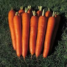 red carrots - 7