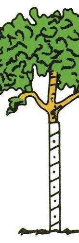 Clarks Tree Wrap (Walter E Clark 36-Inch Vinyl Tree Wrap 00436)