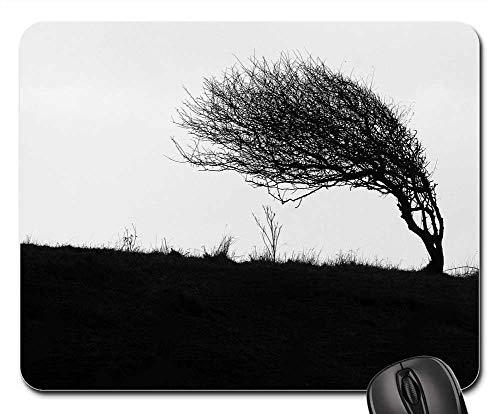 (Mouse Pad - Windswept Tree Cliff Top Coastal Landscape)