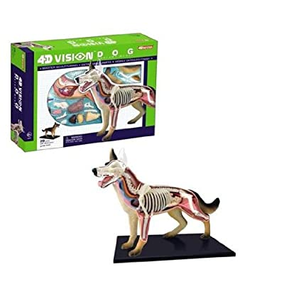 Tedco 4D Vision Dog Anatomy Model: Toys & Games