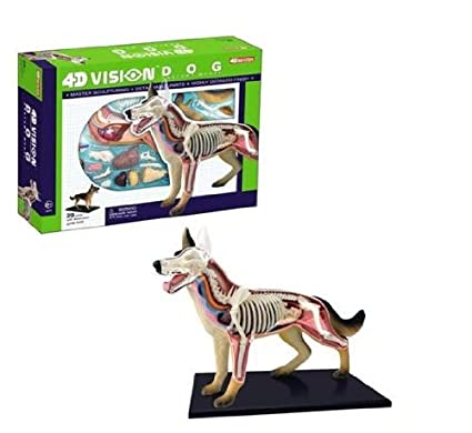Amazon Tedco 4d Vision Dog Anatomy Model Toys Games