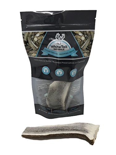 WhiteTail Naturals Premium Split Elk Antlers for Dogs – 1 Pack Large – All Natural Dog Chews – USA Natural Shed – 6 to 7 Inch Long Odorless & Mess Free – Large Antler Chew – For Sale