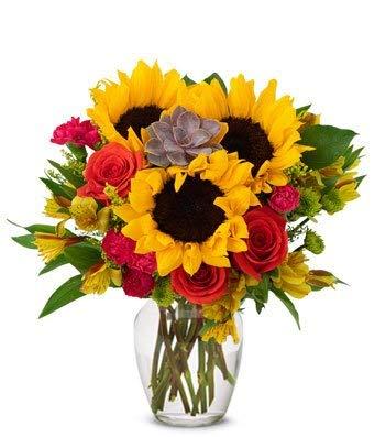 (Flowers - Sunflower Succulent Bouquet (Free Vase)