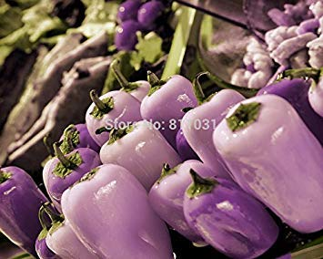 (Hot selling 20pcs/bag purple Crystal pepper rare vegetable seed bonsai plant home garden)