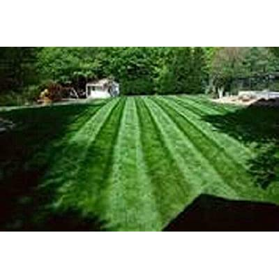 AchmadAnam - Seeds - 10 LBS New Falcon IV Turf Type Fescue Grass Sun OR Shade Grass Seed : Garden & Outdoor