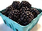 BLACKBERRIES FRESH PRODUCE FRUIT VEGETABLES 6 OZ