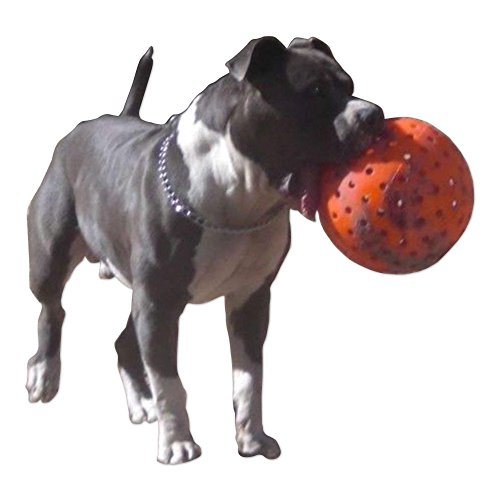 Rottweiler Pit Bull - Indestructible 10 Large Dog Ball in Orange Pit Bulls Mastiffs Rottweiler by Unbranded