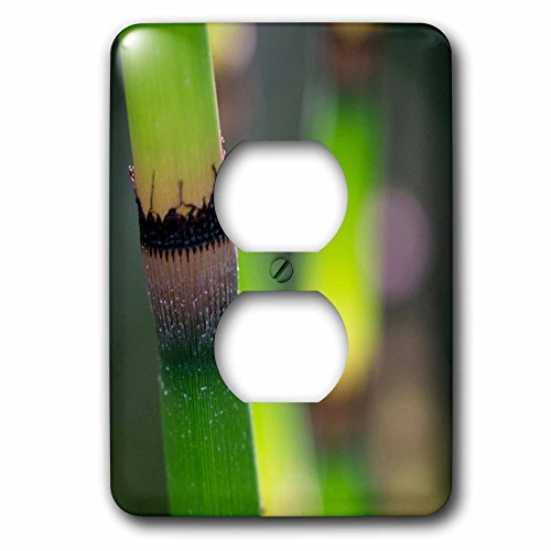 3dRose Danita Delimont - Botanical - Usa, California. Detail of Scouring Rush, Horsetail detail - Light Switch Covers - 2 plug outlet cover (lsp_258918_6)