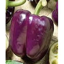 Rare Seeds Sweet Bell Pepper Oda-Ode Organic Russian Heirloom Vegetable Seed