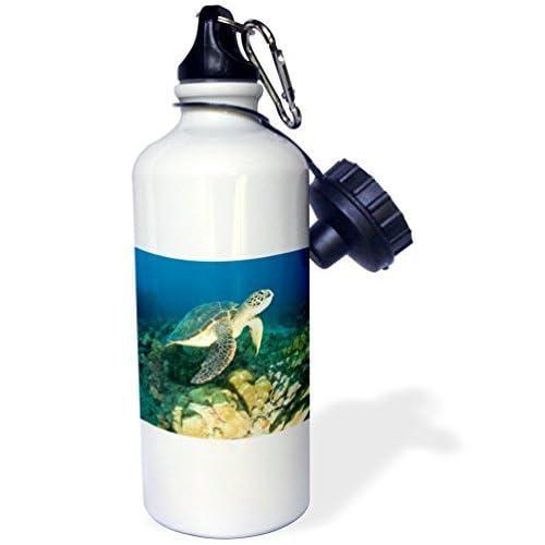 liandun Tortue de mer vert Sport bouteille d'eau, 21oz, blanc