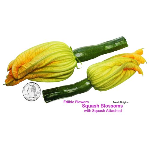 Edible Squash Blossom w/Squash Attached - 25 Count (Pack of 4)