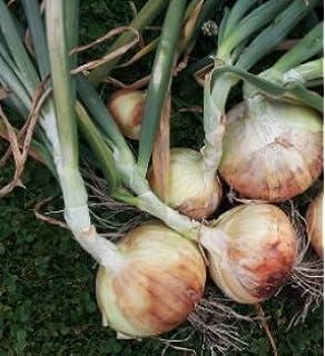 Amazon.com: Seeds Of Change 8178 Certified Organic Sweet ...