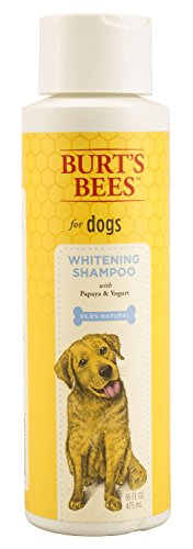 Burt's Bees for Dogs Whitening Shampoo