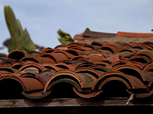 (Photography Poster - Tiles, Roofing, Clay, Terracotta, 24
