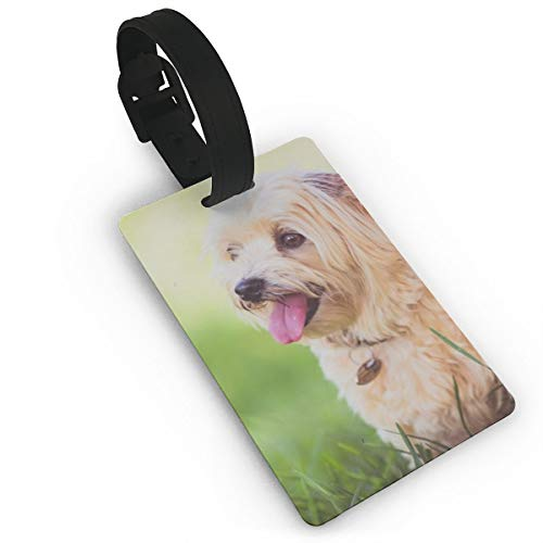 Fshort-Coated Beige Dog Luggage Tags is PVC Material, Durable Very Suitable for Men and Women in Luggage