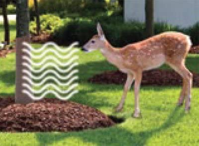Package of 35 Tree Guard Wrap with Built-in Deer Repellent