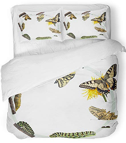 Swallowtail Life Cycle - Emvency 3 Piece Duvet Cover Set Breathable Brushed Microfiber Fabric Green Caterpillar Life Cycle of The Swallowtail Butterfly Metamorphosis Plant Bedding Set with 2 Pillow Covers Twin Size