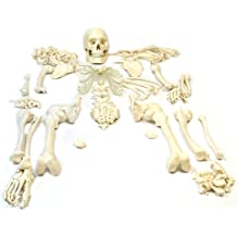 "Disarticulated Human Skeleton, Full, Medical Quality, Life Sized (62"" Model Height) - 23 Intervertebral Discs, 3 Part Skull with Movable Jaw, Left Hand and Foot Jointed"