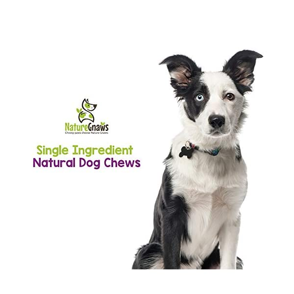 Nature Gnaws Small Bully Sticks - 100% Natural Grass-Fed Free-Range Premium Beef Dog Chews - Single Ingredient & Long Lasting Chew Treats for Dogs 6