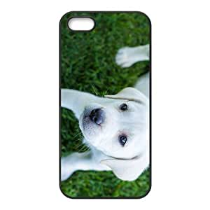 White Dog Hight Quality Plastic Case for Iphone 5s