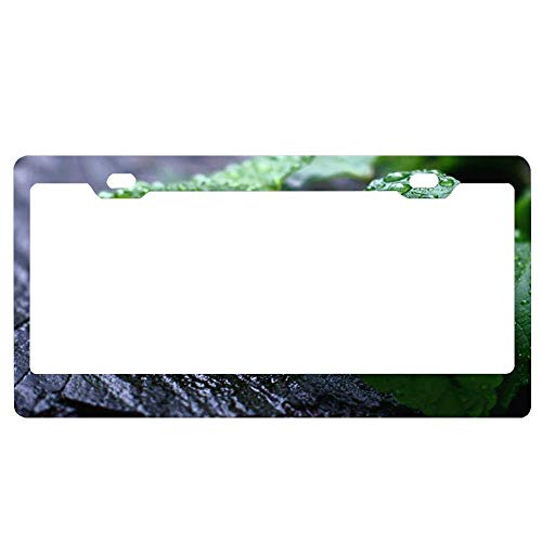 YEX Abstract Fresh Mint Leaves License Plate Frame Car License Plate Covers Auto Tag Holder 6